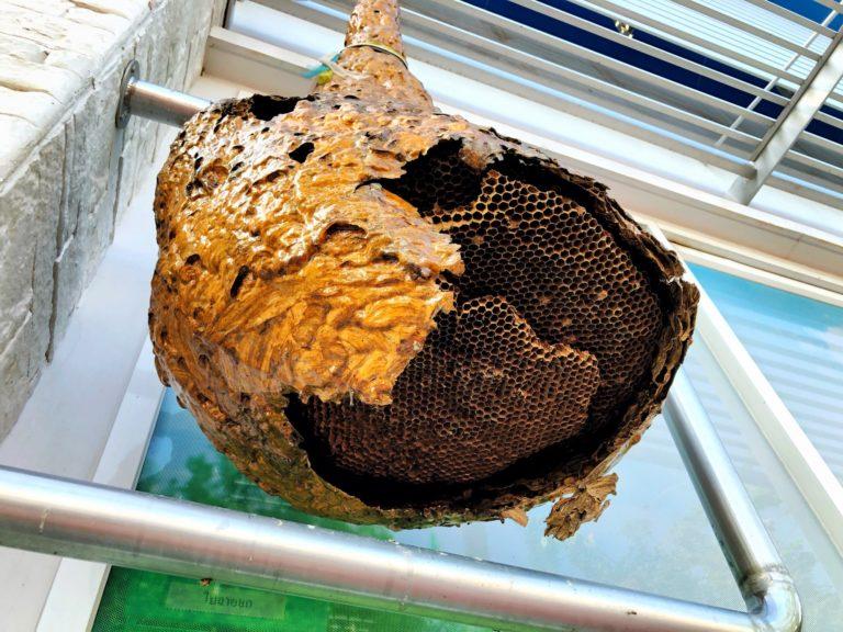 Wasps net