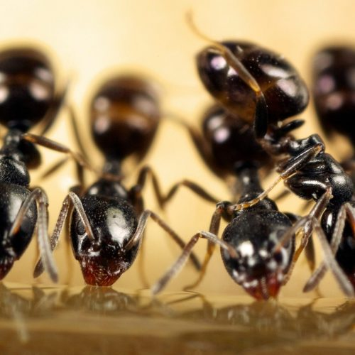 ants feeding