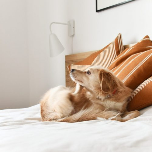 Dog scratching on the bed